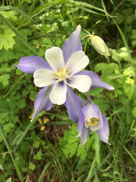 The Columbine Photo By Carey Martin